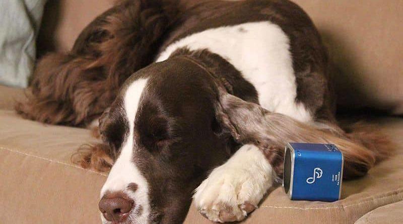 Portable BT speaker for Pet dog Tunes